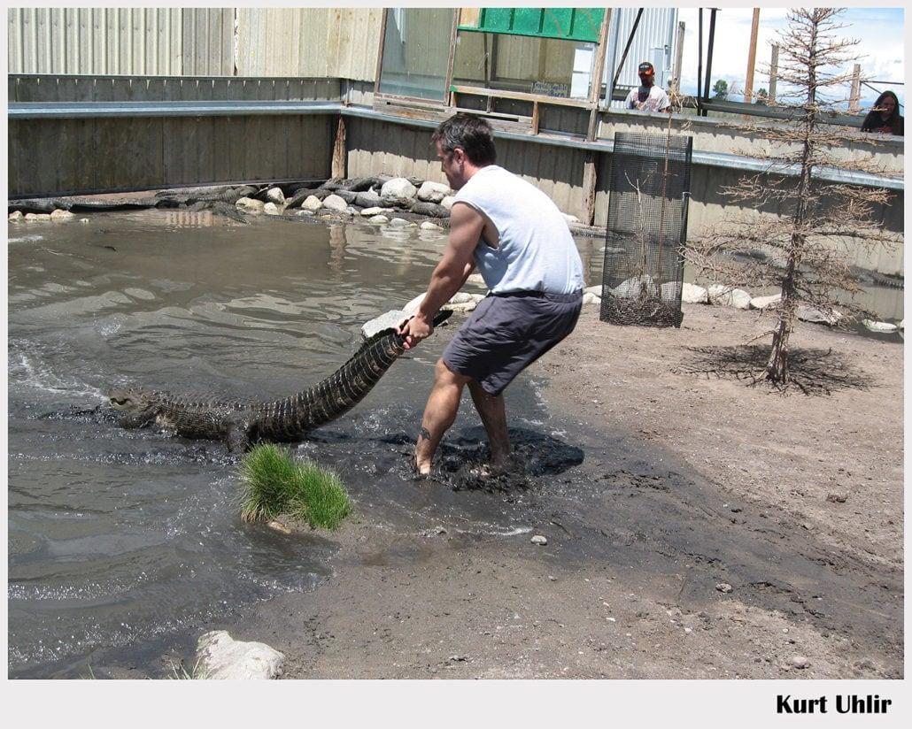 Kurt Uhlir - alligator handling - stunts