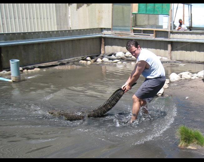 Kurt Uhlir alligator wrangling - handling from pond. Stuntman - Stunts