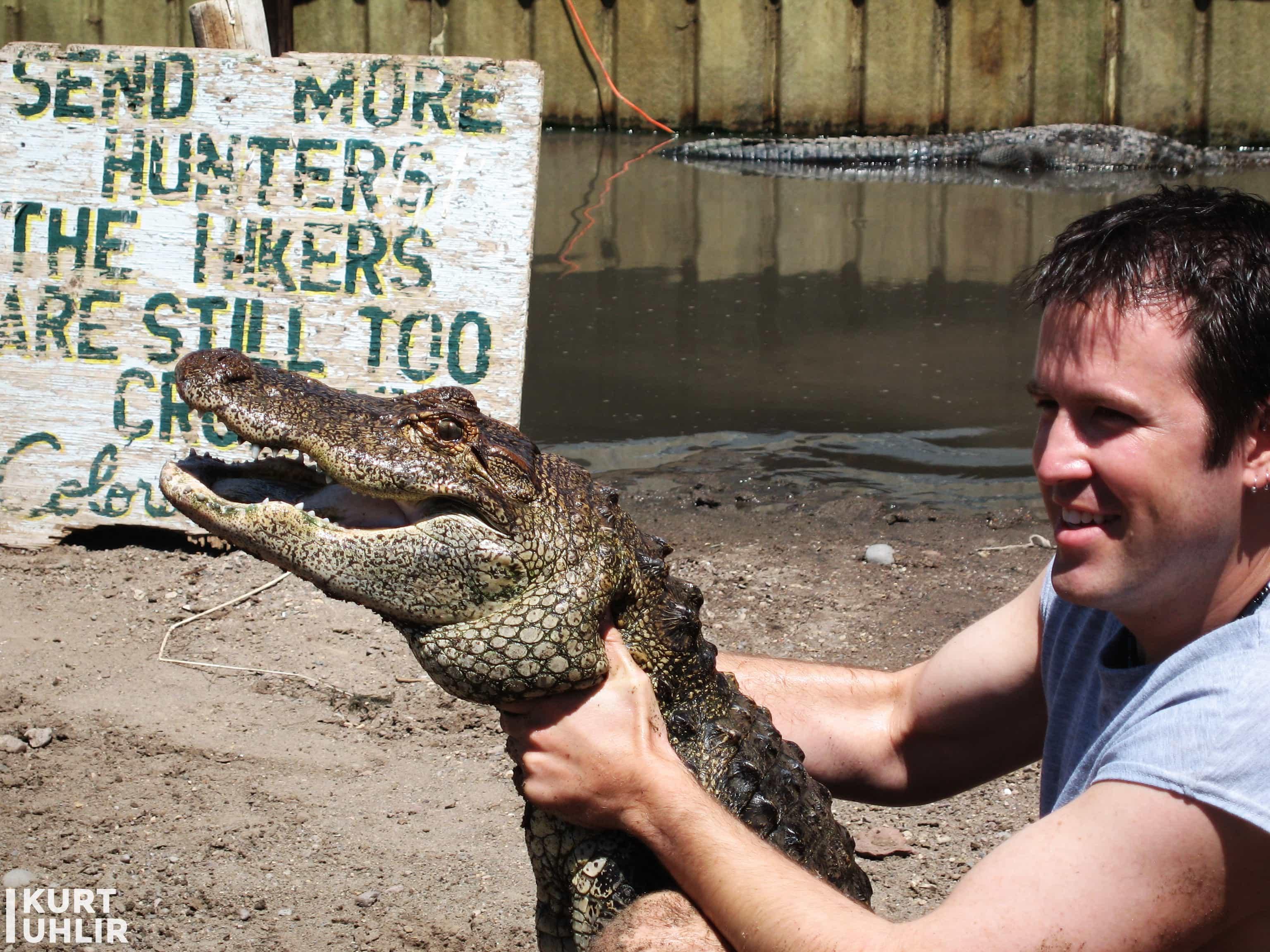 Kurt Uhlir handling a mid-sized alligator